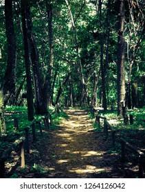 Path in florest