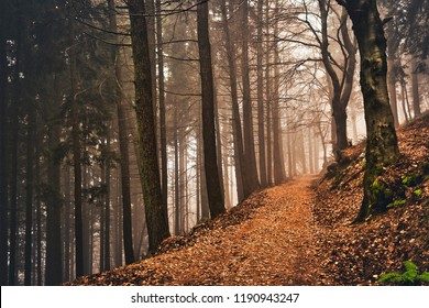 path, fog and autumn colors in the woods of Campo dei Fiori Varese