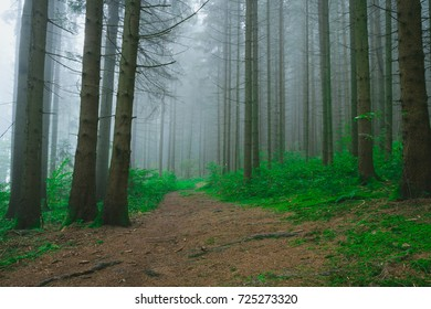 Path with fog in the Bavarian Forest