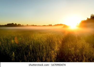Path in a foggy field with blooming different wildflowers in spring. The sun rising in the fog over the horizon. Beautiful landscape in the early summer morning.