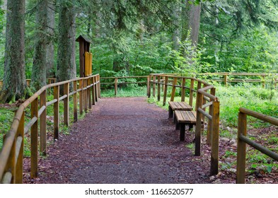 Path at the forest