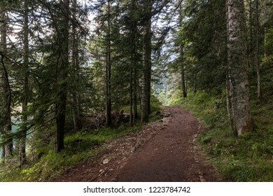 Path in forest around Black Lake, Durmitor National Park, Montenegro