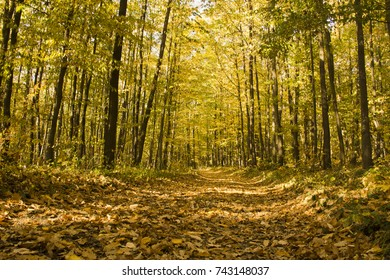 Path in the forest in autumn covered with leaves