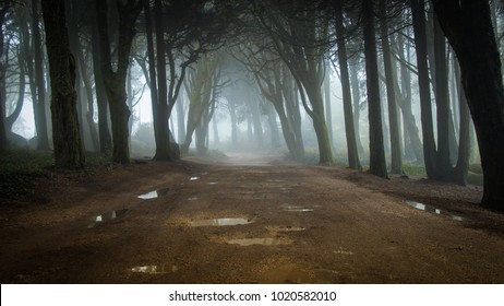 Path in a forest covered with mist