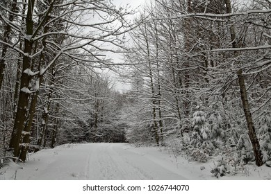 Path in forest covered with snow