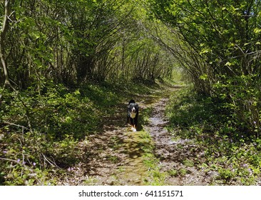 path in the forest with a dog