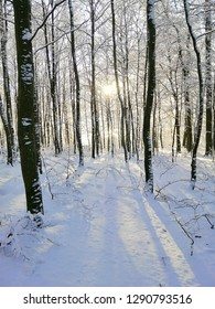 A path in the forest during winter time. Beautiful landscape of Larvik, Norway.