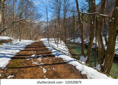 Path in a forest in early spring, after snow