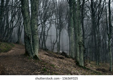 Path to the forest with fog