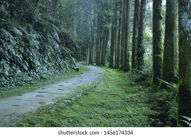 Path in the forest, Mingchih Forest Recreation Area,Yilan.Taiwan