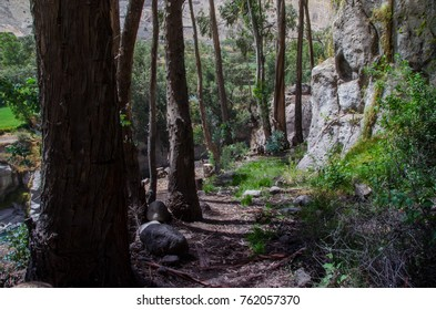 path in forest with rock wall