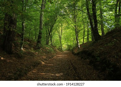 Path in the forest in Sanok, Poland