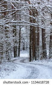 Path in forest snowfall after inside natural stand, Bialowieza Forest, Poland, Europe