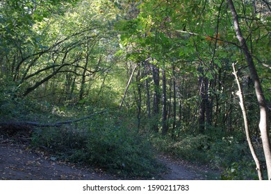 a path in the forest with sunflares and shodows