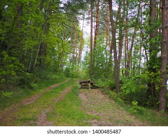 Path in forest, sunny day