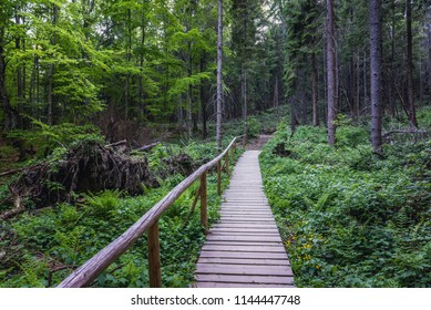 Path in forest under Mount Tarnica, near Wolsate village in Bieszczady National Park, Subcarpathian Voivodeship of Poland