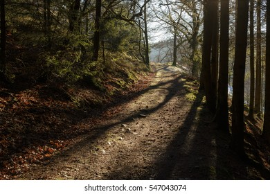 path in forest in winter at sunset time