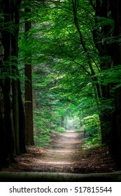 a path in a green forest