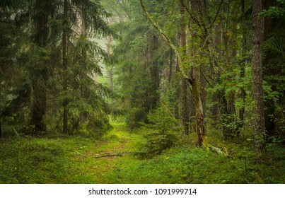 path in green mystical forest