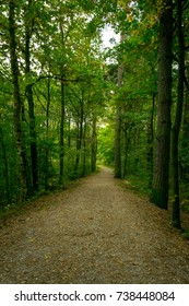 Path in the Green Nature in the bavarian Forest