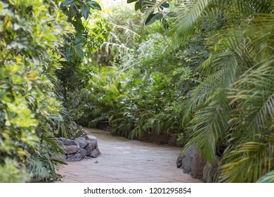 A path in a green park jungle.