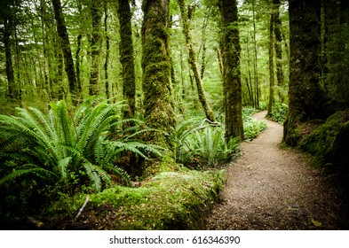 path in the green woods