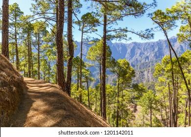 Path inside Caldera de Taburiente National Park in La Palma, Canary Islands