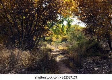 Path into cottonwood grove. Rio Grande Valley State Park, Albuquerque, New Mexico.