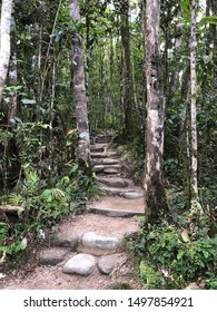 Path into the Daintree Rainforest