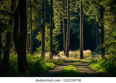 Path into the depth of a forest with warm sunlight breaking through the branches