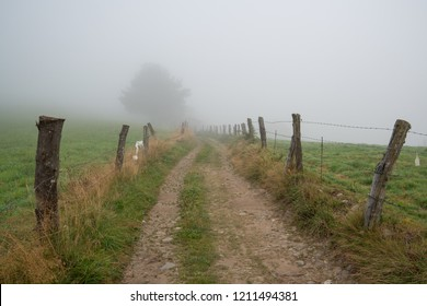 Path into the fog, Camino de Santiago trail between Tineo and Pola de Allande, Asturias, Spain