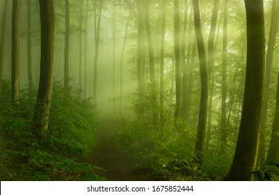 A path into the spring morning forest