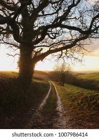 Path into sunset
