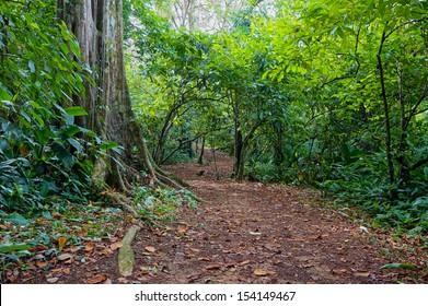 Path in the jungle of Panama, San Cristobal island, Bocas del Toro