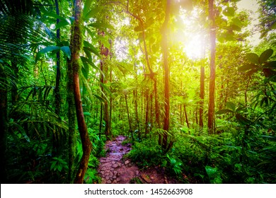 Path in the jungle under a shining sun at sunset. Guadeloupe, Caribbean