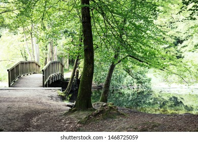 Path leading to a bridge over a river in Wohldorfer Wald, a deciduous forest near Hamburg, Germany