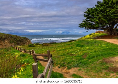 Path leading to the Pacific Ocean in Northern California beyond a green hill covered in spring flowers, Moss Beach near San Francisco on a cloudy day