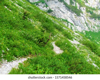 Path leading past a mountain meadow full of white and yellow flowers on the way to Crna Prst in Triglav national park and Julian alps, Slovenia - Shutterstock ID 1571458546