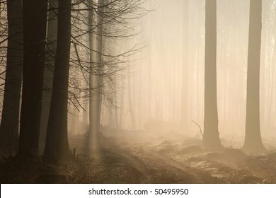 Path leading through a misty forest at sunrise. Photo taken in April.