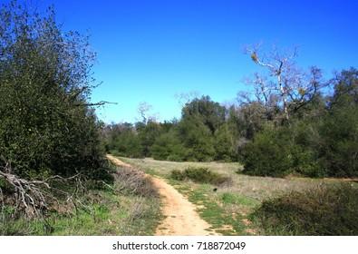 Path leading through oak trees, California