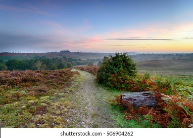 A path leading through Rockford Common on a misty dawn morning in the New Forest national park in Hampshire