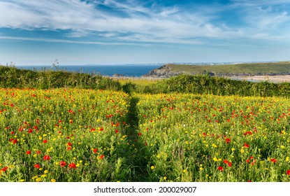 Path leading through a wildflower meadow on cliffs above Crantock Beach at West Pentire near Newquay in Cornwall