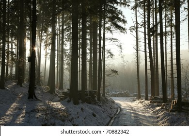 Path leading through the winter conifer forest in the direction of the setting sun.