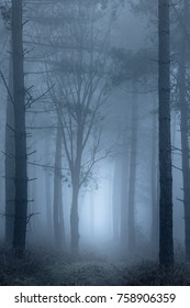 A path leading through woodland on a very foggy morning.