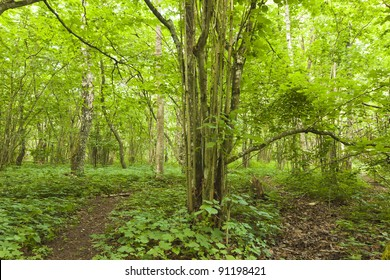 Path leading thround wood with hazel, bright vibrant colors