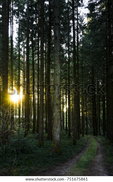 A path leading towards the setting sun in a thick coniferous forest in Bavaria, Germany.