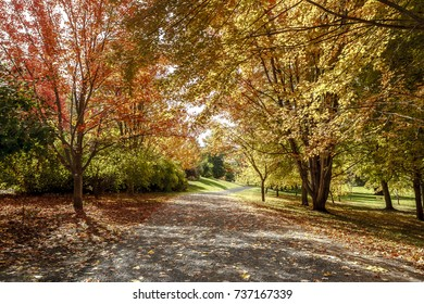 A path leads through the arboretum in autumn in Moscow, Idaho.
