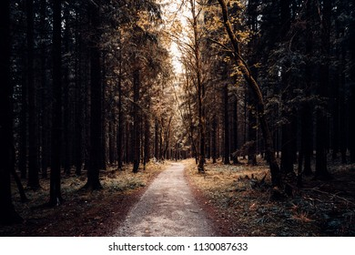 Path leads through autumn coniferous forest