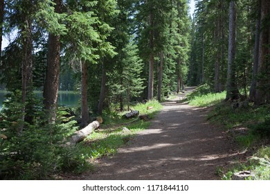 A path leads through an evergeen forest by a lake on western Colorado's Grand Mesa on a summer afternoon