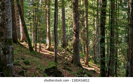 A path leads upwards between the trees of a forest located in the Swiss Jura mountains. The forest is lush green and moss and sticks and trees cover the forest floor.